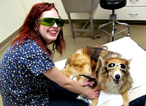 laser therapy Patt Veterinary