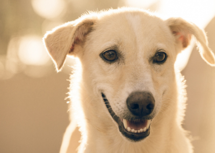 Your Pet Has Cancer...Now What?