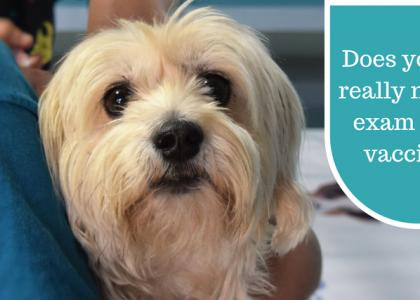 An Exam Before Vaccines: Does My Pet Really Need This?