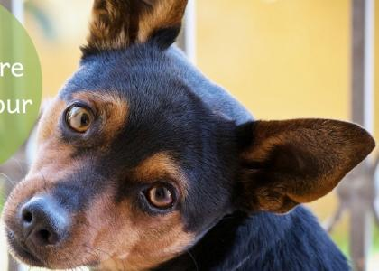 Photo of a dog tilting his head, curiously