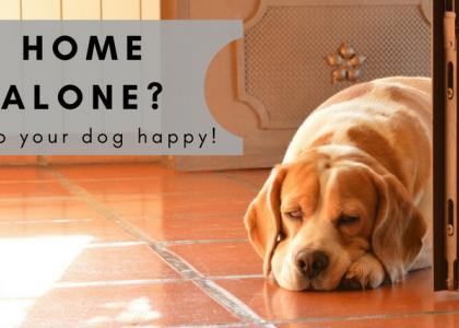 Home Alone? How to Keep Your Dog Happy