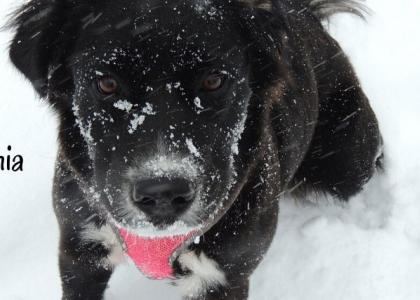 A dog outside during a snow storm