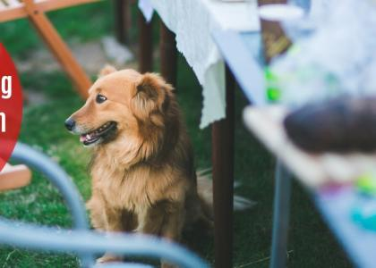 Photo of a dog sitting by a picnic table