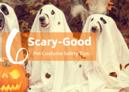 6 Scary-Good Pet Costume Safety Tips