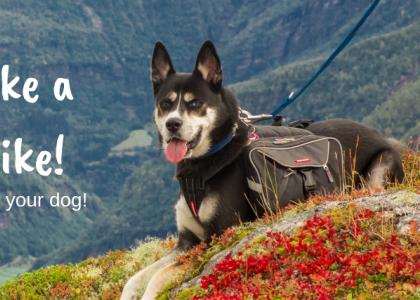 Take a Hike! The Benefits of Walking Your Dog